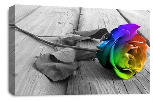 Rose Flower Canvas Wall Art Rainbow Grey White Floral Picture Print